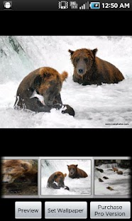 Katmai Bears screenshot