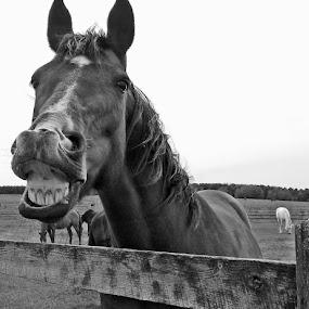 Sugar Cubes by Maureen Rueffer - Animals Horses (  )