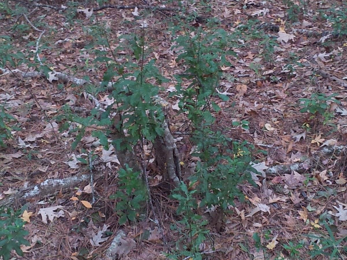 unknown plants