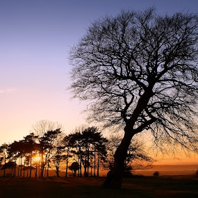 trees silhouetted at sunset by Keren Woodgyer - Landscapes Sunsets & Sunrises ( calm, hills, nobody, copy space, bright, silhouette, beauty, glow, landscape, pretty, photography, colour, tranquil, backlit, sky, tree, nature, idyllic, evening, sunbeam, orange, leaning, scenics, beautiful, sunlight, rural, country side, blue, horizontal, sunset, outdoors, trees, golden )