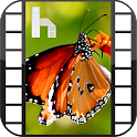 Butterfly Free Homescreen