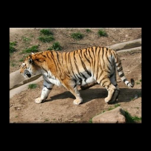 Animals jigsaw puzzles LOGO-APP點子
