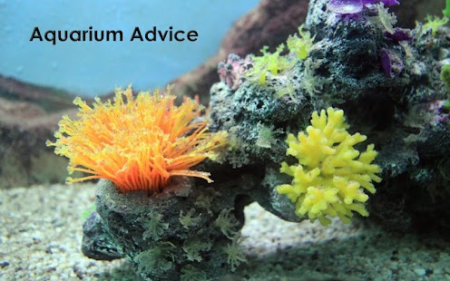 Aquarium Tips and Tricks - screenshot thumbnail