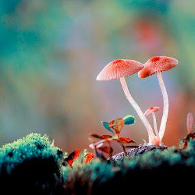 by Suhaimi Azzura - Nature Up Close Mushrooms & Fungi