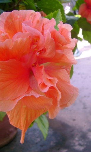 熱帶蘭花壁紙
