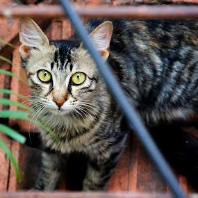 Wildlife Photography at home by Mallikarjun Nath - Animals - Cats Kittens