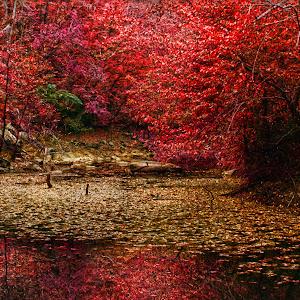 fall-crk-graham.jpg