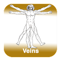 Anatomy - Veins icon