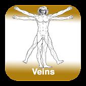 Anatomy - Veins