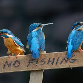 no fishing please  by Raj Dhage - Animals Birds (  )