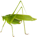 Crickets and More Ringtones icon