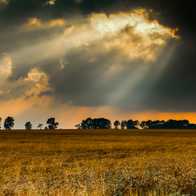 Fields of gold by Riaan Www.rampix.co.uk - Landscapes Prairies, Meadows & Fields ( clouds, skyline, rampix photography, sunset, silhouette, sunrays, rampix, sun, photography,  )