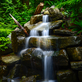 waterfall over dark rocks in forest by Kathy Dee - Nature Up Close Water ( water, waterfalls, canada, green, beautiful, white, forest, vancouver, ferns, amazing, falls, brown, rocks, garden, rain )