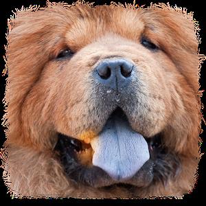 最好的狗的名字 生活 App LOGO-APP試玩