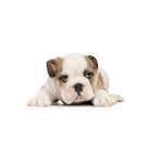 Puppy Training Tips icon