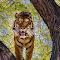 20150208 Phx Zoo568.jpg