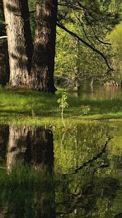 Still Pond HD for Google TV- screenshot thumbnail