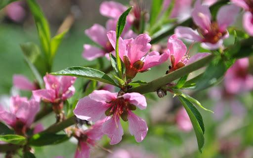 花卉圖片高清