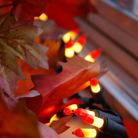 by Shelly Hendricks - Public Holidays Thanksgiving ( fall, color, colorful, nature,  )