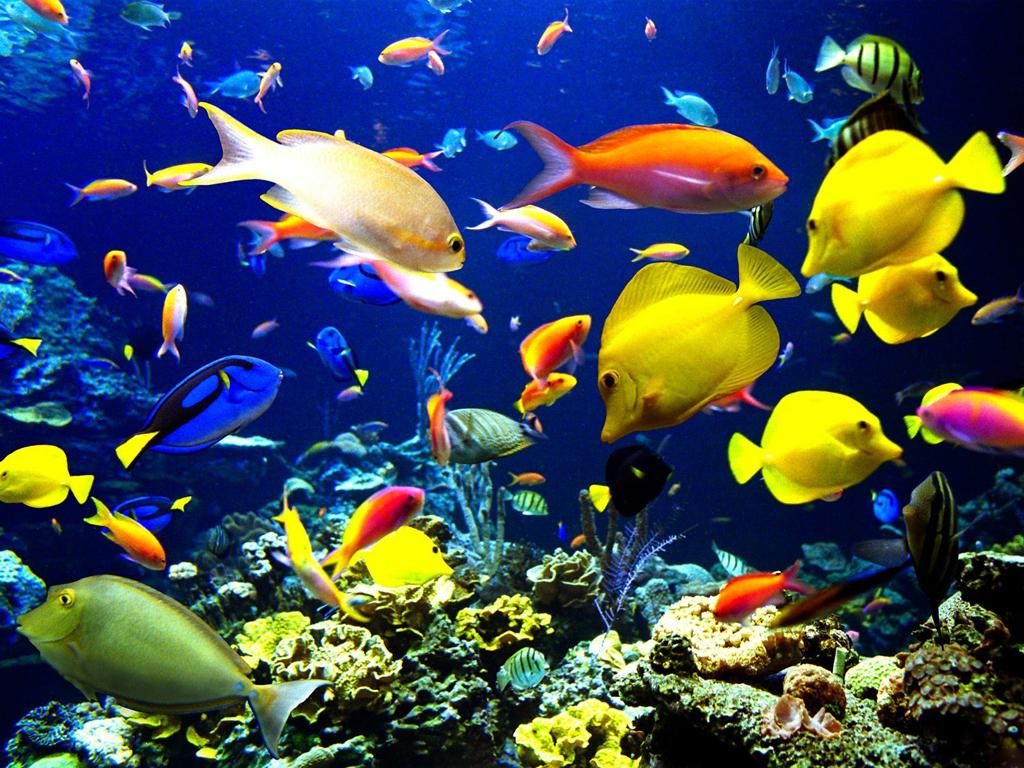 Tropical Fishes Live Wallpaper   Android Apps on Google Play