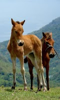 Screenshot of الخيول : الألغاز للأطفال والأس