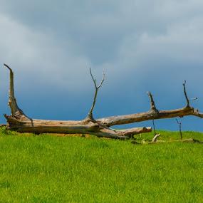 fallen tree by Reshmid Ramesh - Nature Up Close Trees & Bushes ( fallen tree, wood, tree )