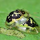 Beetle Mating