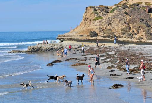 San-Diego-Del-Mar-dogs - Dogs on the beach in Del Mar, near San Diego, California.