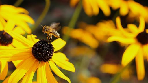 꿀벌 배경 화면
