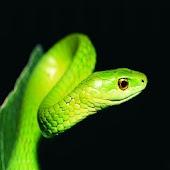 3D cute Snake