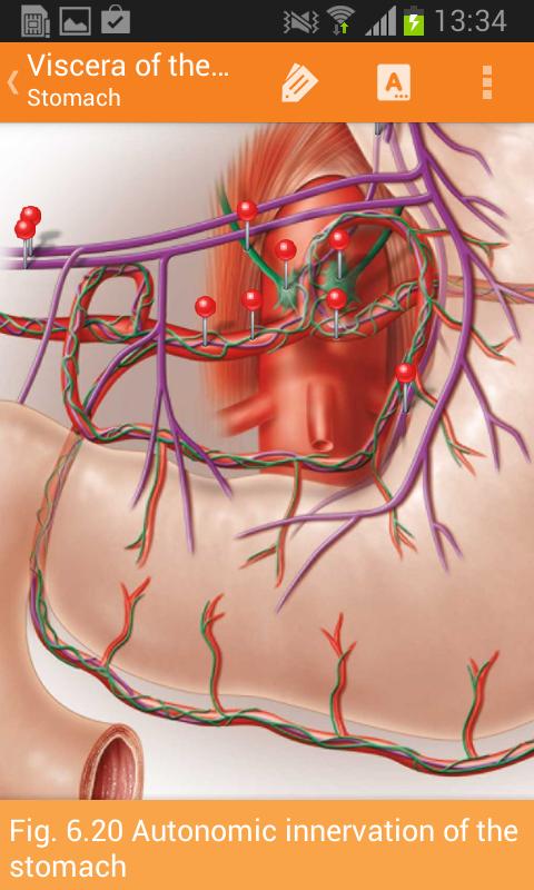 Sobotta Anatomy Screenshot 5