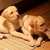 Dog and Puppy Videos