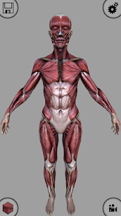 MARA3D Human Anatomy Lite - screenshot thumbnail