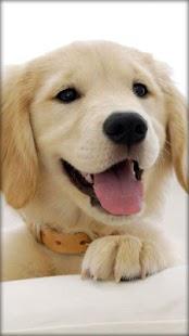 小狗動態壁紙