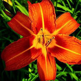 So pretty :) by Kisha Webb - Flowers Flowers in the Wild