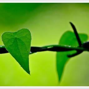 Go Green by Madhu Payyan Vellatinkara - Nature Up Close Leaves & Grasses ( nature, green, drops, leaves, nikon )