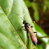 Cuckoo Bee