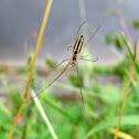 Stretch spider
