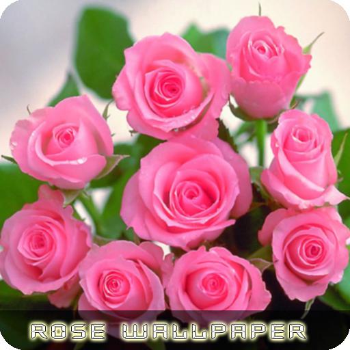 roses flower wallpapers v2 apps on google play