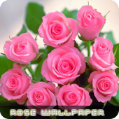 Roses flower Wallpapers V2