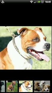 Hundar i Världen: Fakta&Bilder- screenshot thumbnail