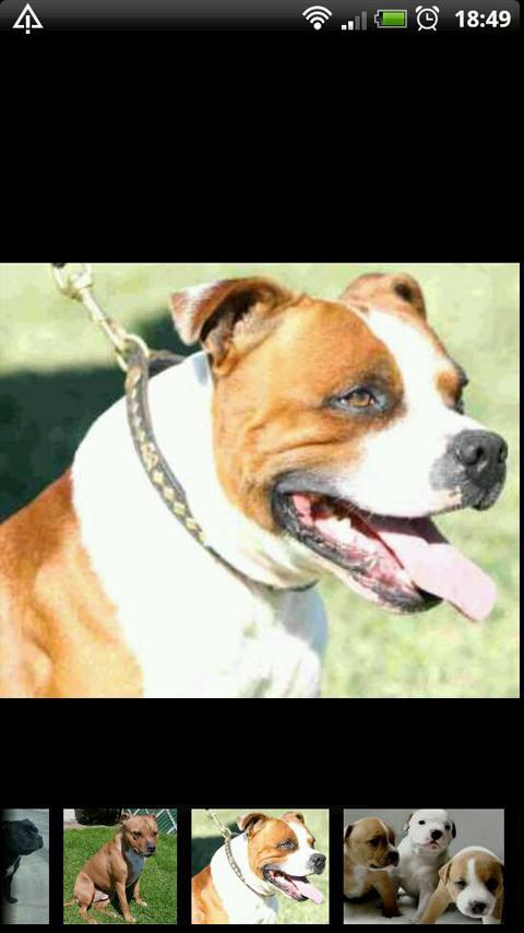 Hundar i Världen: Fakta&Bilder- screenshot