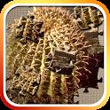 Saguaro National Park Jigsaw