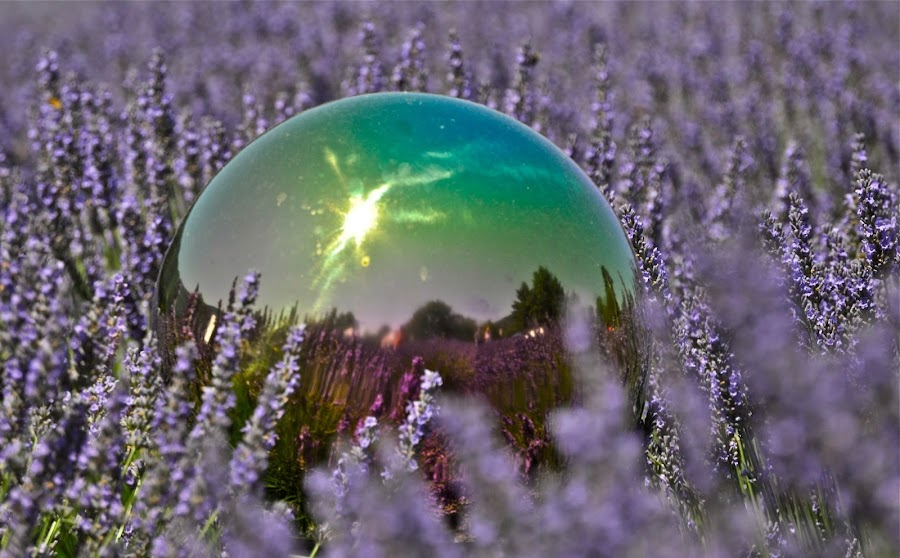 Lavender Globe by Janet Young- Abeyta - Artistic Objects Still Life (  )