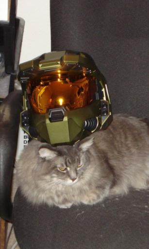 Cats Helmet Live Wallpaper
