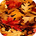 Fall Leaves Wallpapers logo