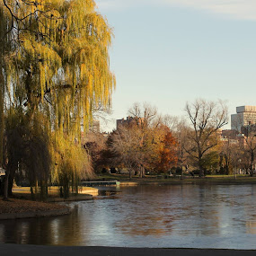 Boston Common by David Montemayor - City,  Street & Park  City Parks