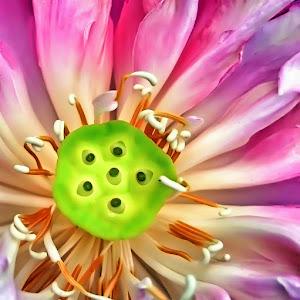 p bunga rz.jpg