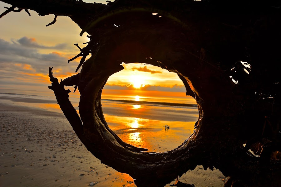 THROUGH THE ROOT by Bethany Kenney - Landscapes Sunsets & Sunrises ( trees, sunrise,  )