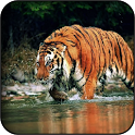 Siberian Tiger Wallpapers icon